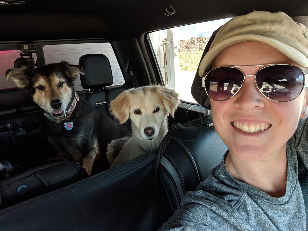 dogs in truck going to alaska